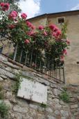 rapolano,san vittore,rose, rondine, amore (27)