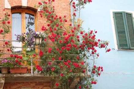 rapolano,san vittore,rose, rondine, amore (33)