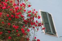 rapolano,san vittore,rose, rondine, amore (5)