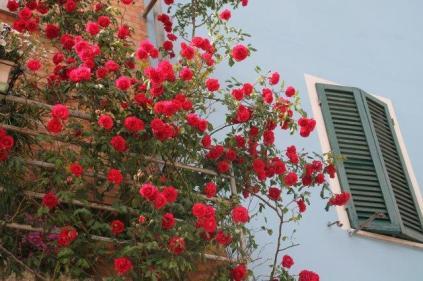 rapolano,san vittore,rose, rondine, amore (6)