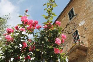 rapolano,san vittore,rose, rondine, amore (8)