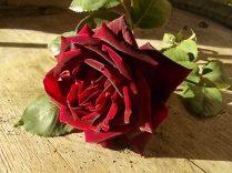 rose e giaggioli vertine (1)