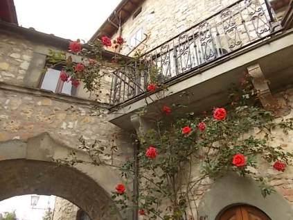 rose e giaggioli vertine (6)