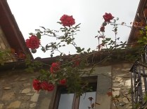 rose e giaggioli vertine (7)