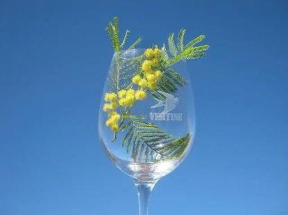 federica calice di stelle e mimosa