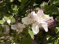 vertine fiori giugno (1)