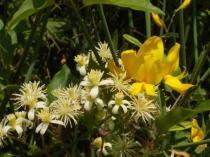 vertine fiori giugno (20)