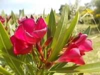 vertine fiori giugno 2021 (15)