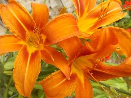 vertine fiori giugno 2021 (28)