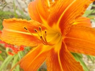 vertine fiori giugno 2021 (30)