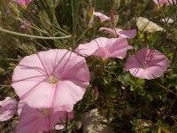vertine fiori giugno 2021 (9)