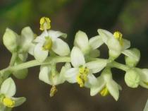 vertine fiori giugno (5)