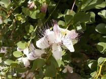 vertine fiori giugno (7)