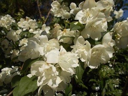 vertine giugno 2021 fiori (1)