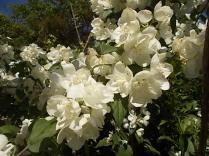 vertine giugno 2021 fiori (5)