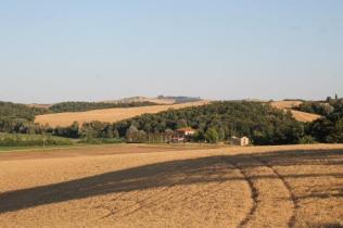 berardenga, il grano della carta del mulino (11)