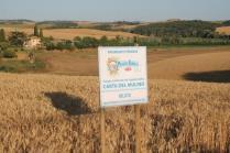 berardenga, il grano della carta del mulino (12)
