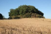 berardenga, il grano della carta del mulino (2)
