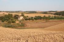 berardenga, il grano della carta del mulino (6)