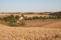 berardenga, il grano della carta del mulino (8)