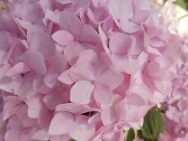 fioriture mese di luglio (1)