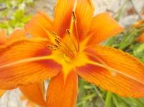 fioriture mese di luglio (10)