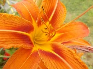 fioriture mese di luglio (11)