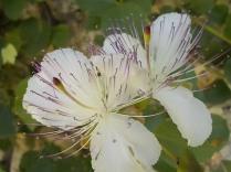 fioriture mese di luglio (12)