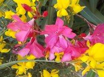 fioriture mese di luglio (17)