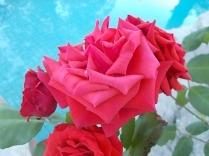 fioriture mese di luglio (19)