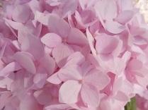 fioriture mese di luglio (2)