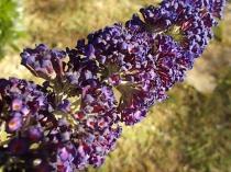 fioriture mese di luglio (21)
