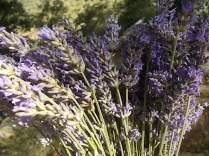 fioriture mese di luglio (23)