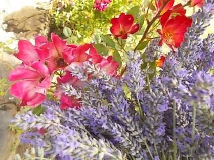 fioriture mese di luglio (24)