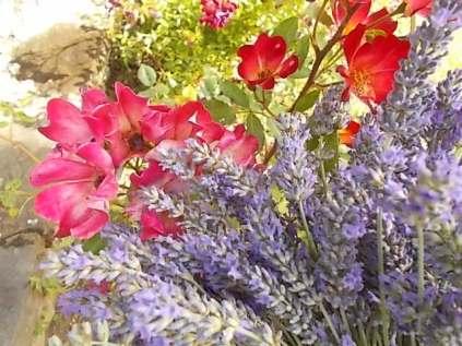 fioriture mese di luglio (25)