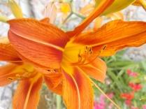 fioriture mese di luglio (26)