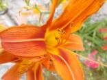 fioriture mese di luglio (27)