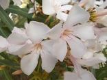 fioriture mese di luglio (28)