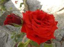 fioriture mese di luglio (3)