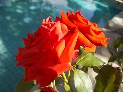 fioriture mese di luglio (4)