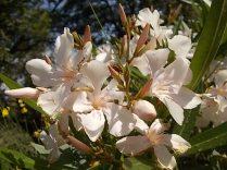 fioriture mese di luglio (7)