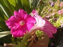 fioriture mese di luglio (8)