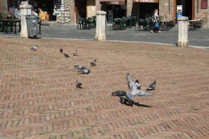 signora che getta pane bagnato ai piccioni piazza del campo (13)