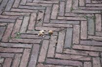 signora che getta pane bagnato ai piccioni piazza del campo (8)