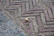 signora che getta pane bagnato ai piccioni piazza del campo (9)