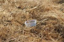 vaschetta frigo campo grano berardenga (6)