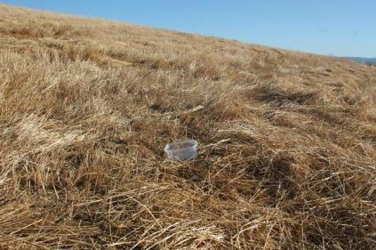 vaschetta frigo campo grano berardenga (7)