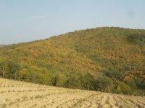 estete 2021 siccità bosco (1)