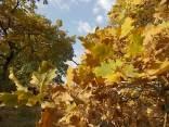 estete 2021 siccità bosco (10)