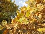 estete 2021 siccità bosco (12)
